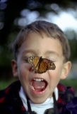 Child with monarch butterfly on nose
