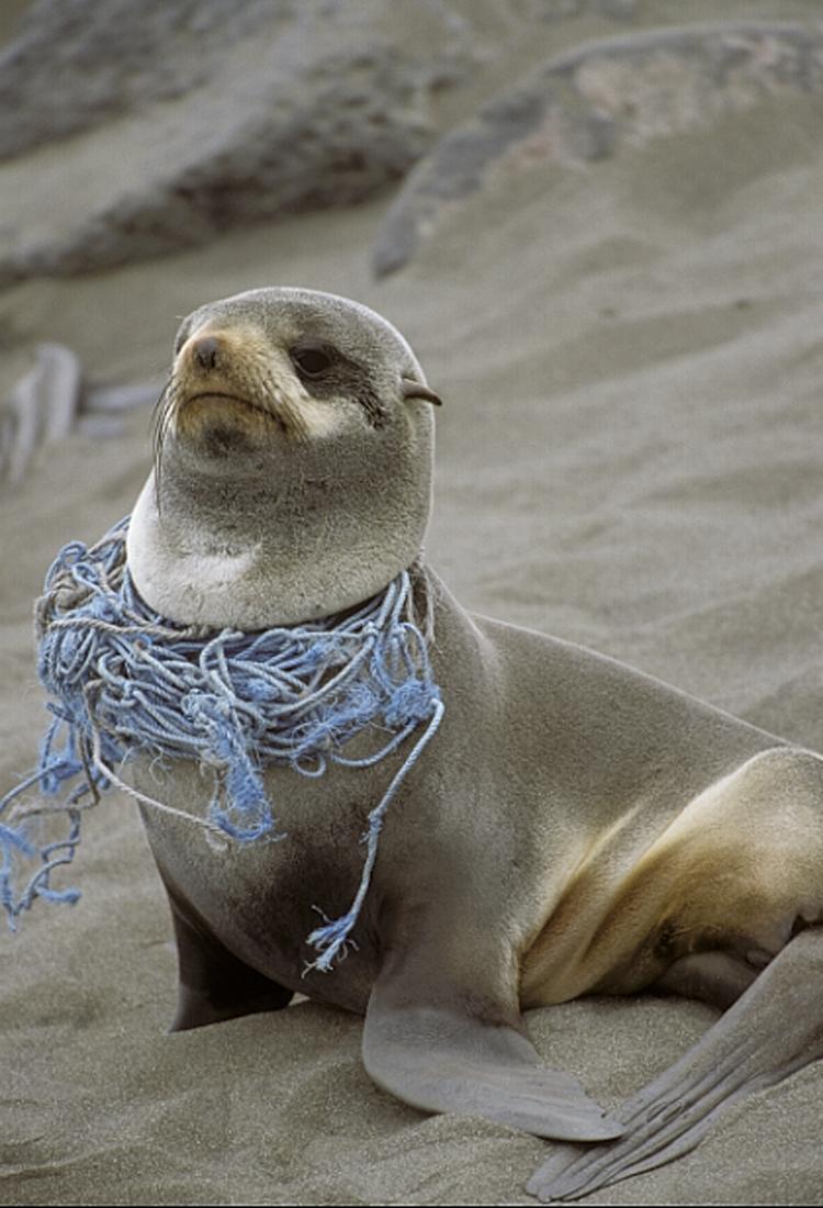 entangled-seal-2
