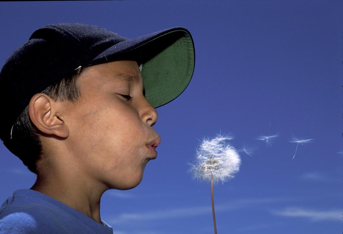 Child blowing dandylion