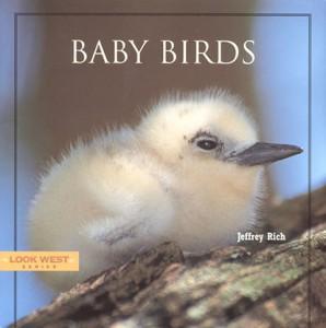 babybirdcover